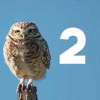 Слайдер для сайта Owl Carousel 2 — настройка просто и быстро